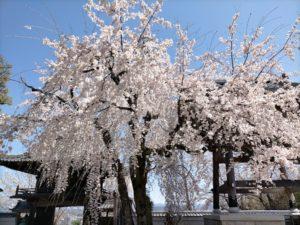 nagoya-amimono-school-2021-5-5-1